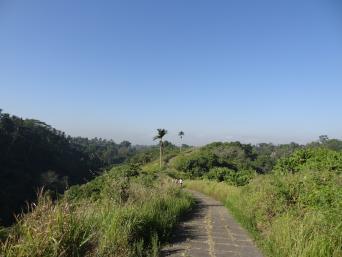Bali Campuhan Ridge Walk