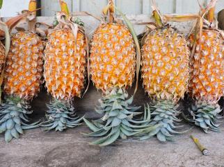 Pineapple Pic